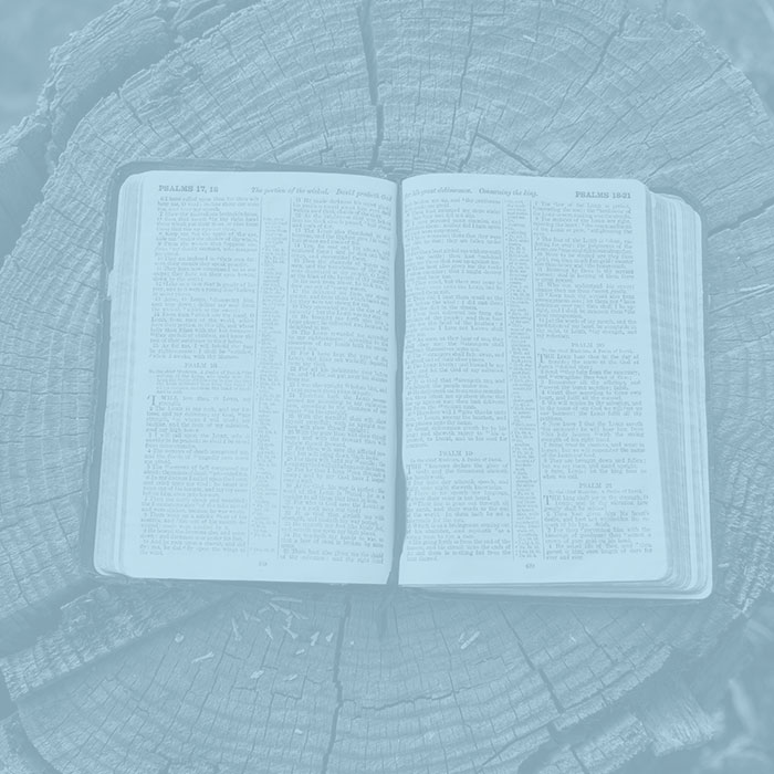 Bible on tree stump