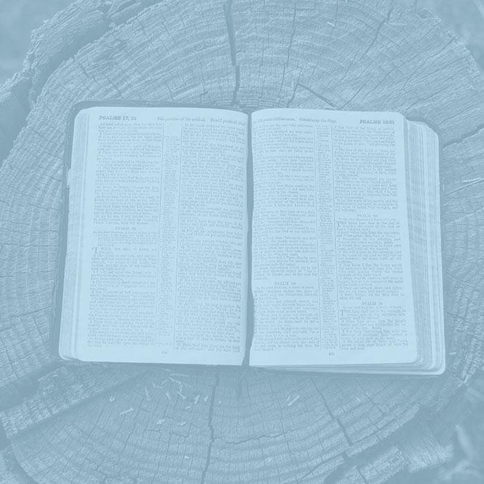 Bible-on-tree-stump